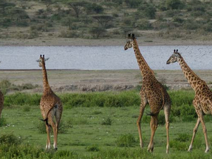 Safari Kenya and Tanzania Fotos