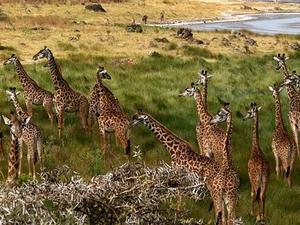 East Africa Adventure Trip