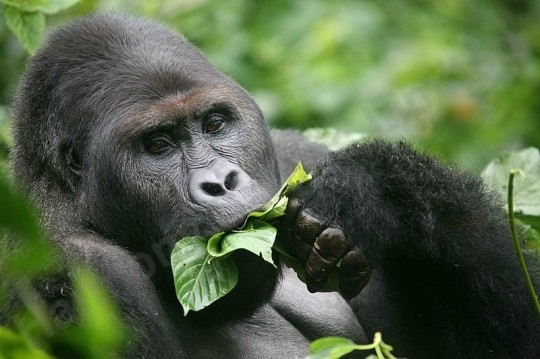 Bwindi, Queen, Murchison Falls & Ssese Island Safari Photos