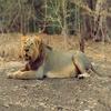 Gir-National-Park-Junagadh
