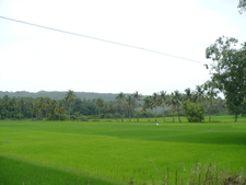Goa Fields