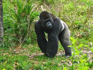 8 Days Rwanda-Uganda Ultimate Safari Encounter Photos