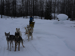 Grandvalira Mushing (dogsled) Photos