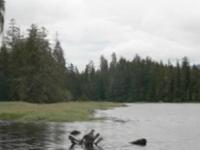 Gravelly Creek Picnic Area