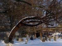 Old Gravesend Cemetery