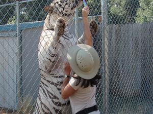Great Cats World Park