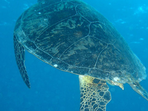 Outer Great Barrier Reef Snorkel Cruise from Port Douglas Photos