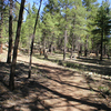 Griffith Spring Trail