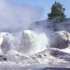 Grotto Geyser - Yellowstone - USA