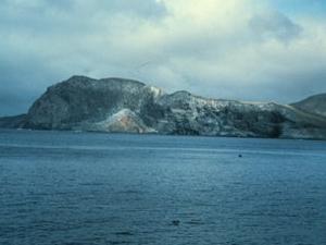 Guadalupe Island