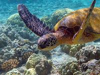 Gulf Of Mannar Marine National Park