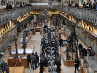 Gallery of Palaeontology And Comparative Anatomy
