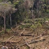 Gorongosa Clearcut