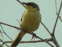 Simpson Desert Important Bird Area