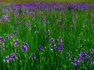 Hajta Marsh Nature Reservation