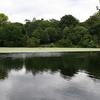 Hampstead Heath Pools