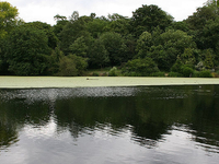 Hampstead Heath Pools