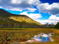 Harlequin Lake Trail
