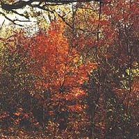 Henderson County Conservation Area