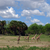 Selous Safari Package