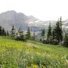 Hidden Meadow Trail - Glacier - Montana - USA