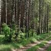 Hiking Trails Of The Knyszyńska Primeval Forest