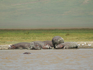 Day Tour From Arusha Town To Ngorongoro Crater