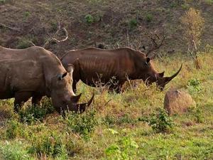 Hluhluwe Game Reserve - South Africa