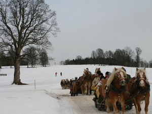 Christmas Horse-Drawn Sleigh Ride from Salzburg Photos