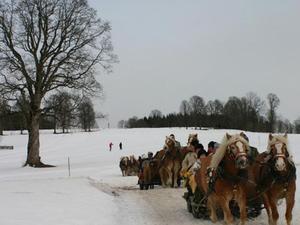 Christmas Horse-Drawn Sleigh Ride from Salzburg Photos