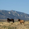 Horses In Front Of Ruby Mountains