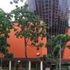 Hougang Mall