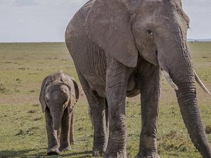Humbling Sweetwaters ~ Kenya Photos