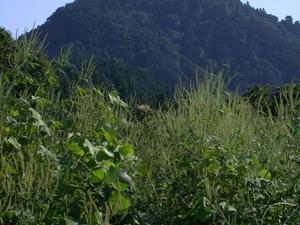 Hachiōji Castle