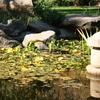 Lake In Himeji Gardens