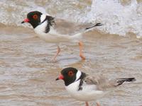 Melaleuca to Birchs Inlet Important Bird Area
