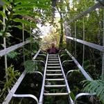 Ihaia Track to Waiaua Gorge Hut