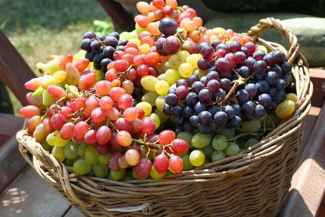 Wine Tour - Krasnodar Region Photos