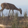 Grazing Around Tadoba Lake