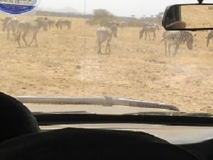 East Africa Budget Adventure Safaris Photos