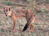 Bethuadahari Wildlife Sanctuary