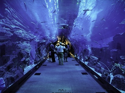 Inside Dubai Aquarium