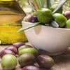 International Congress on the Mediterranean Diet