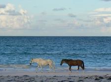 Horses Harbour Island