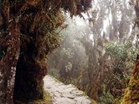 Peruvian Yungas