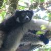 Indri Andasibe