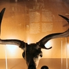 Irish Elk In Museonder