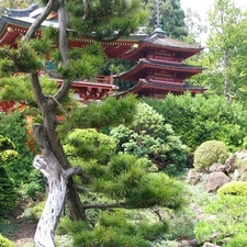 The Japanese Tea Garden