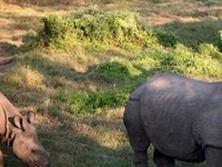 Chitwan Jungle Safari Tours