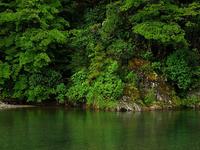Kaimanawa Forest Park